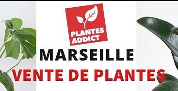 https://the-place-to-be.fr/wp-content/uploads/2021/08/vente-de-plantes-par-Plantes-Addict-marseille-89e8b652.jpg