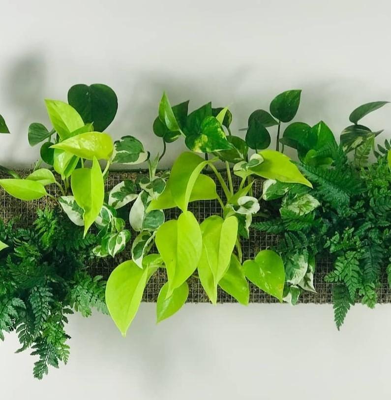 https://the-place-to-be.fr/wp-content/uploads/2021/09/vente-plantes-bordeaux-plantes-addict-3f8b7c43.jpg